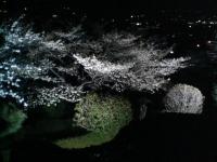 20070408a.jpg