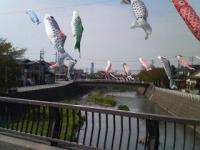 20080423fish.jpg